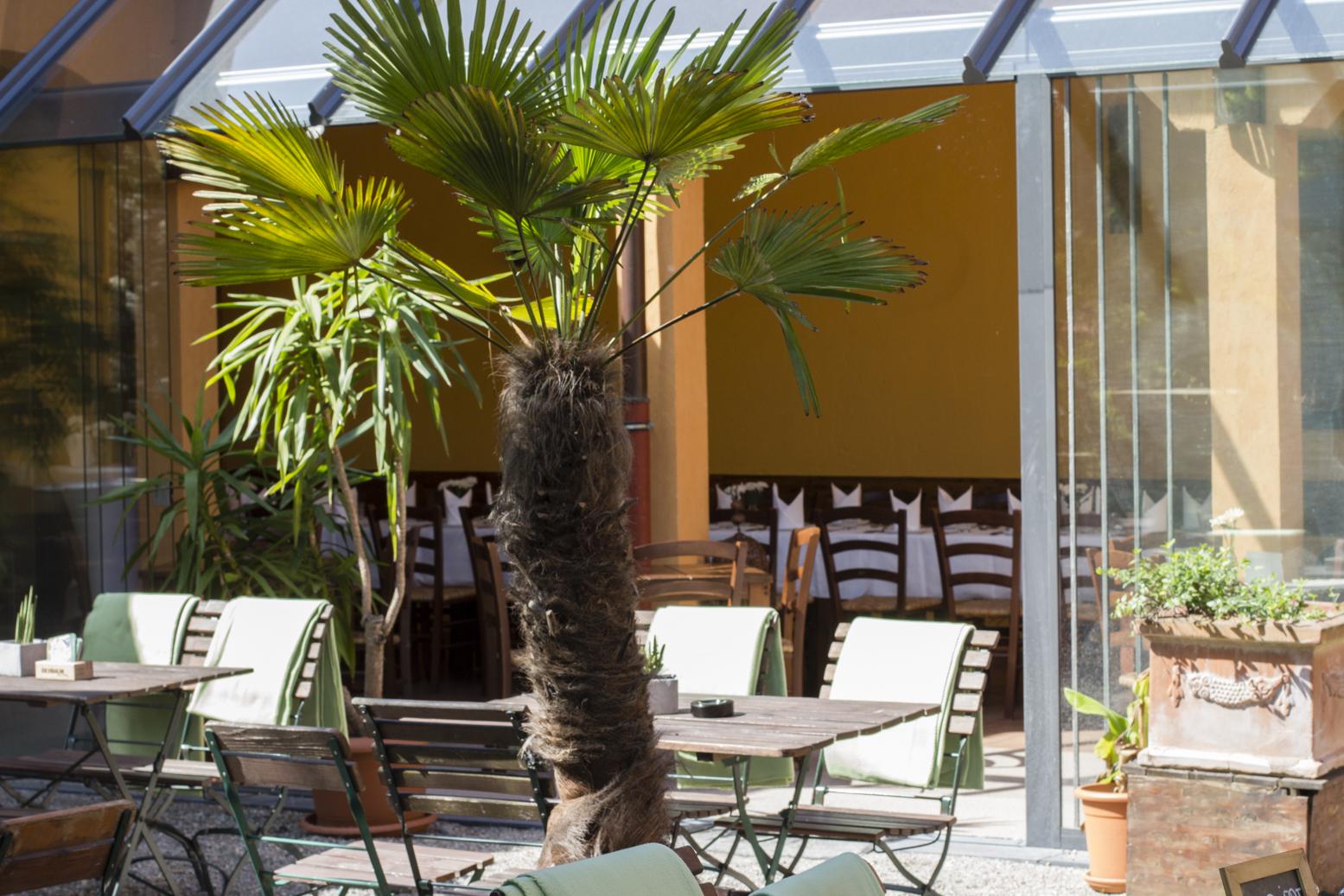 neuer wintergarten palmen biergarten mai 2015 landhaus. Black Bedroom Furniture Sets. Home Design Ideas